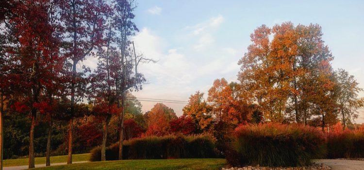fall at the farm 2020