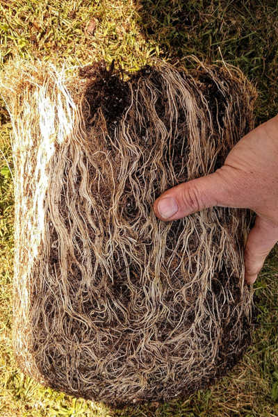 roots of a potted plant