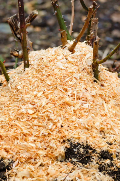 Sawdust to cover plants