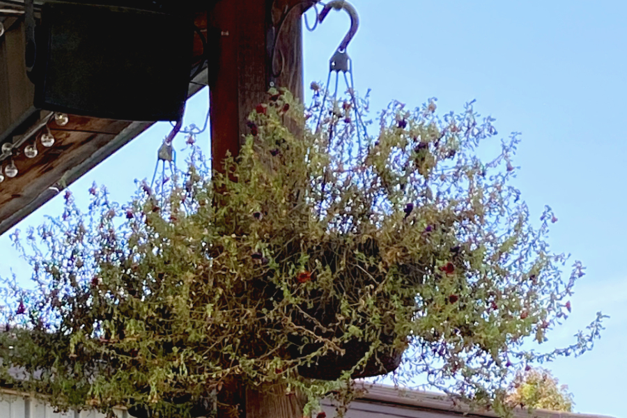 recycling hanging baskets