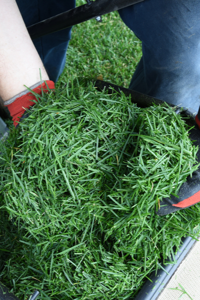 grass clippings - growing your own mulch