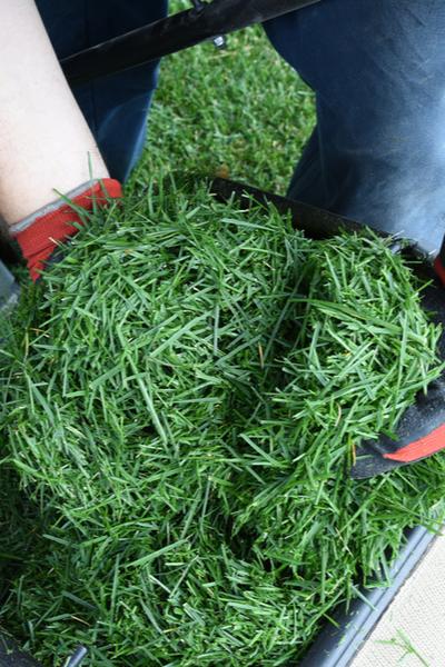 Grasschnitt - Züchten Sie Ihren eigenen Mulch