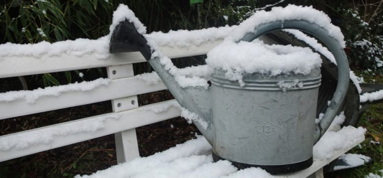 5 wintertime garden projects