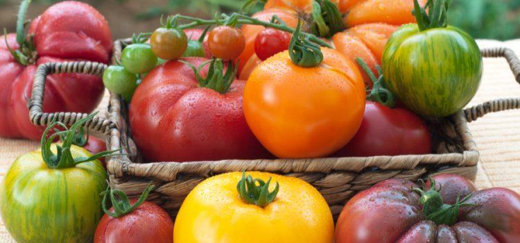 must grow heirloom tomatoes