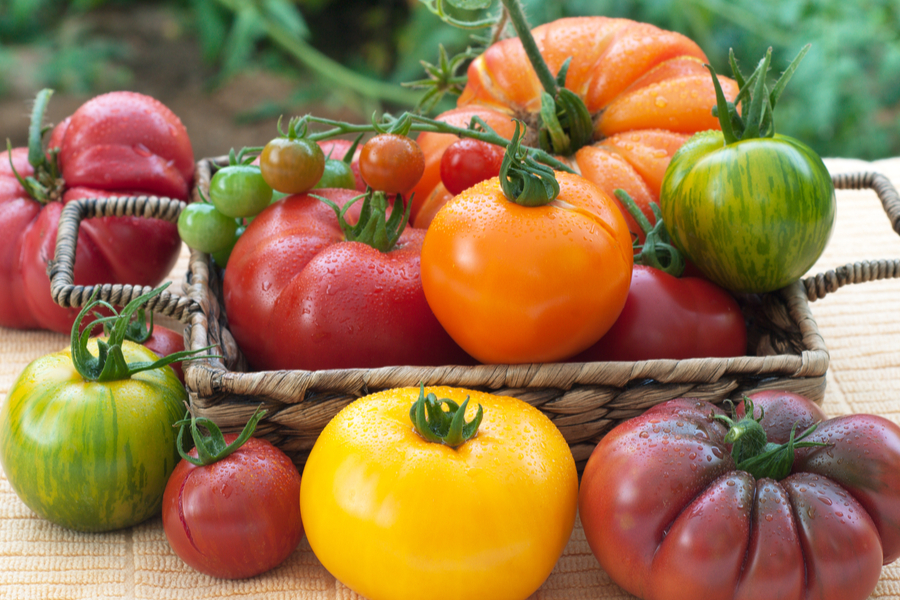must grow heirloom tomatoes