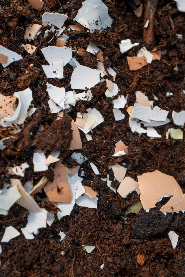 using coffee grounds and egg shells