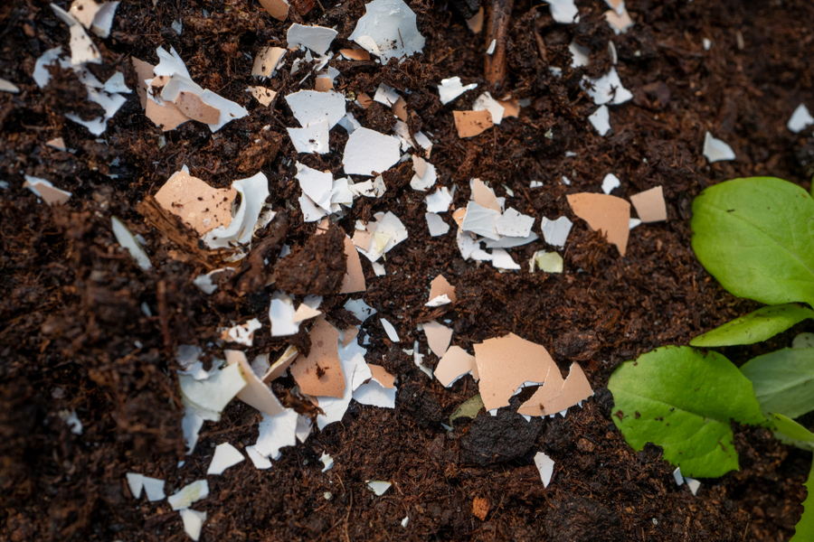 how to use coffee grounds and egg shells