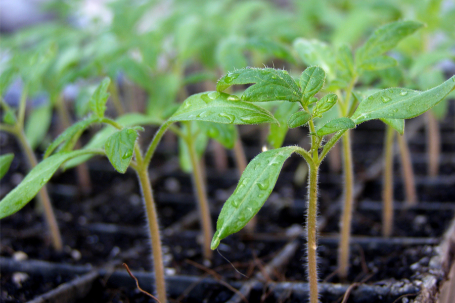 how to grow plants from seed indoors