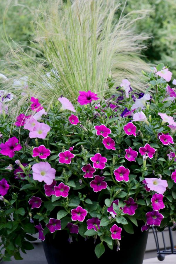 fertilizing potted plants