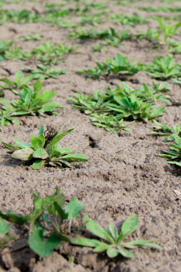 bare garden soil