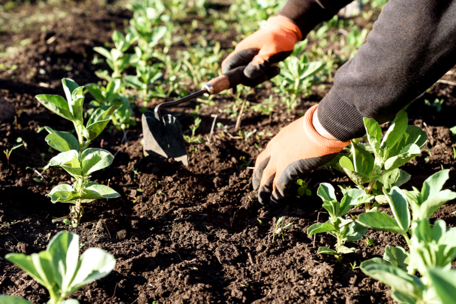 eliminate weeds from the garden