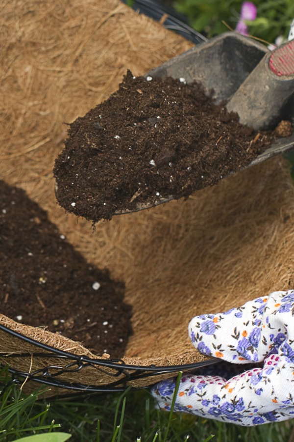 hängende Korbpflanzen wachsen lassen