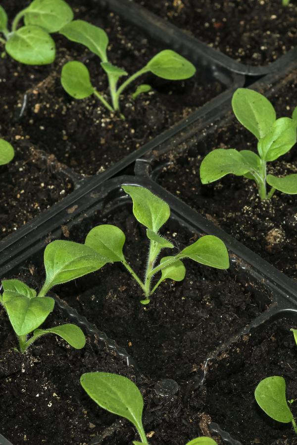 hängende Körbe aus Samen