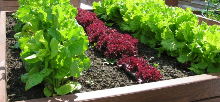 rejuvenate raised bed soil