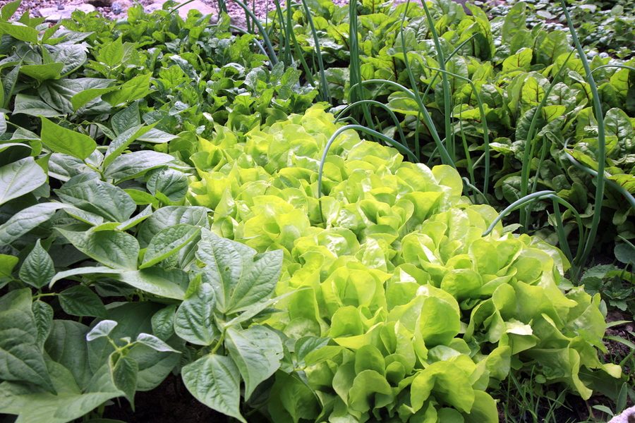 plant early spring crops