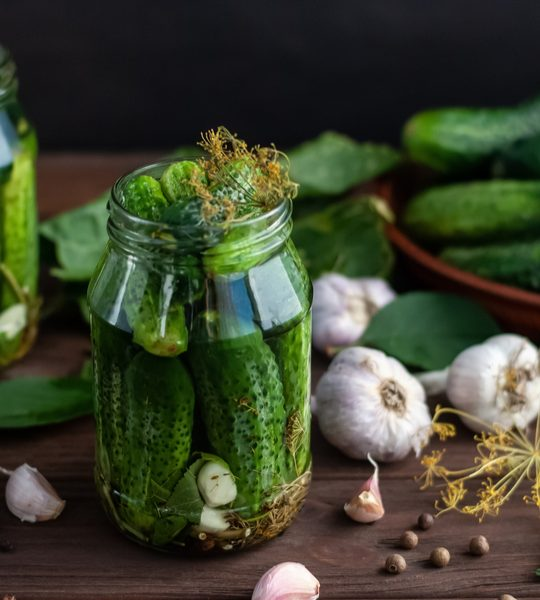 best cucumber plant for making pickles