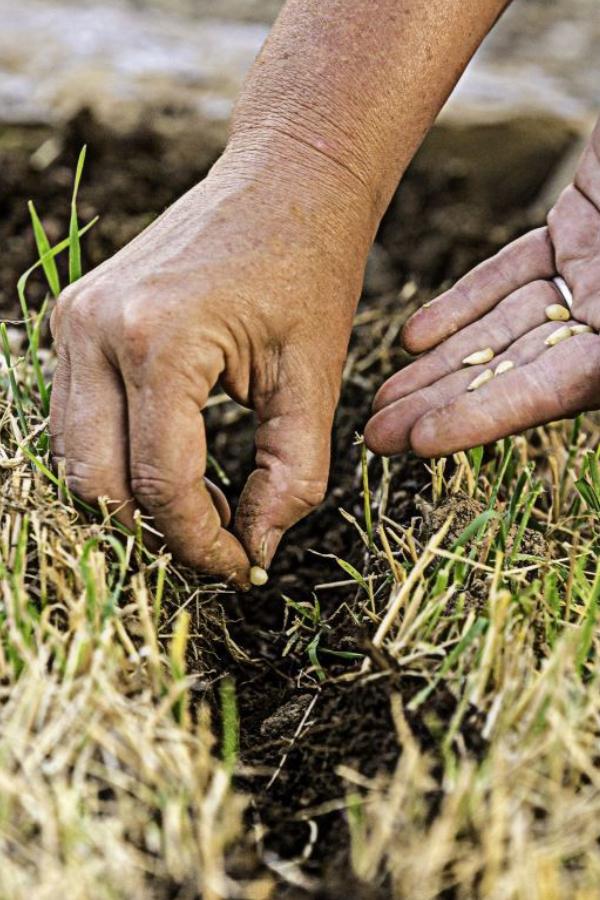 planting seeds in spring