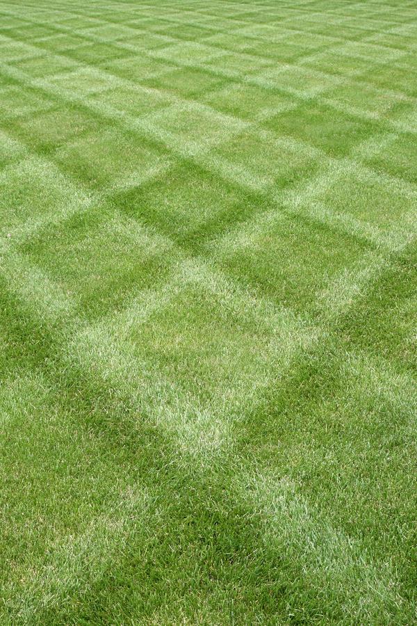 stripe a lawn like a pro