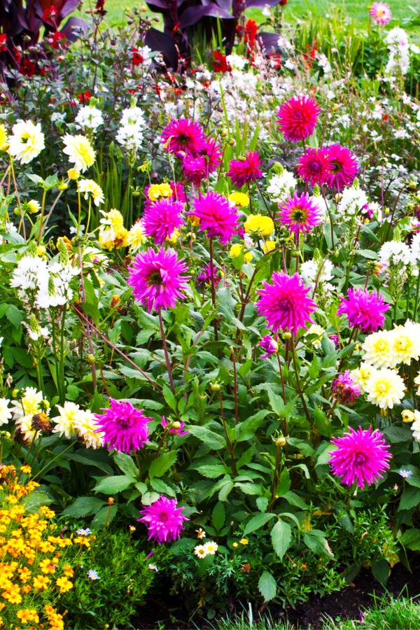 flowerbed weeds