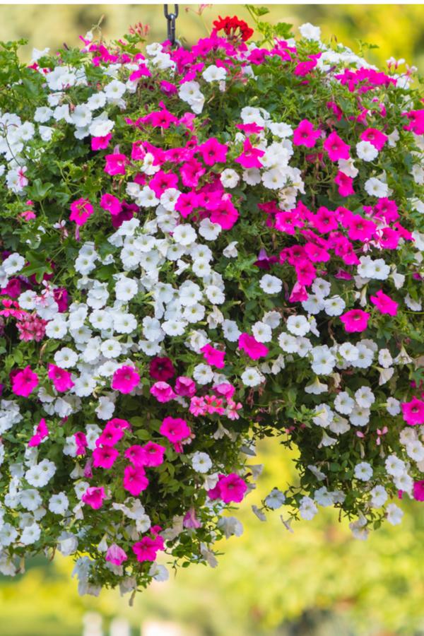 flowering baskets