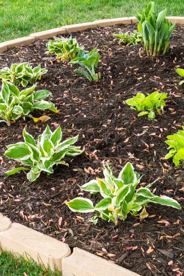 weed free flowerbeds