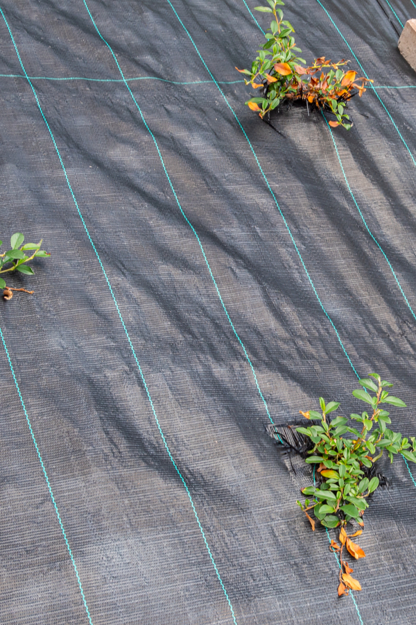 weed fabric