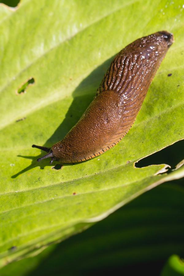 how to stop slugs
