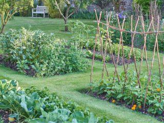 plant a summer garden