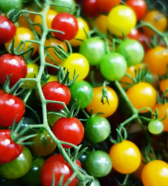 what to do with cherry tomatoes