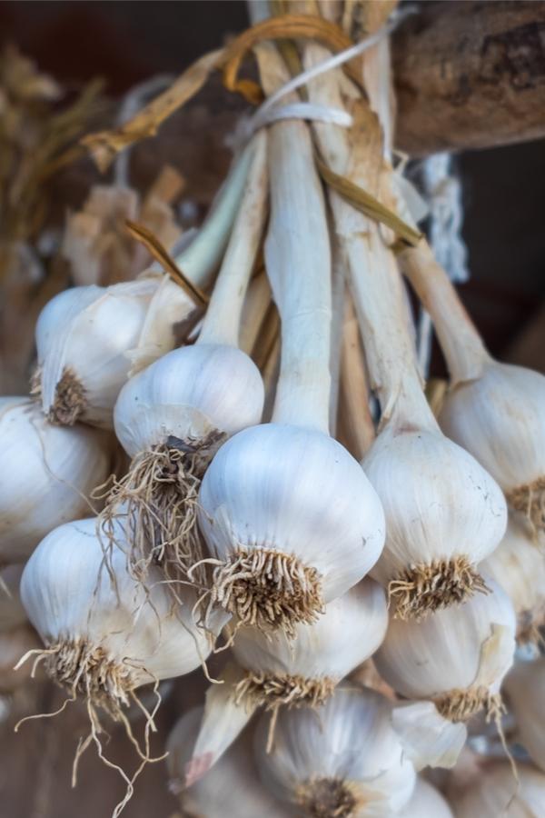 drying garlic