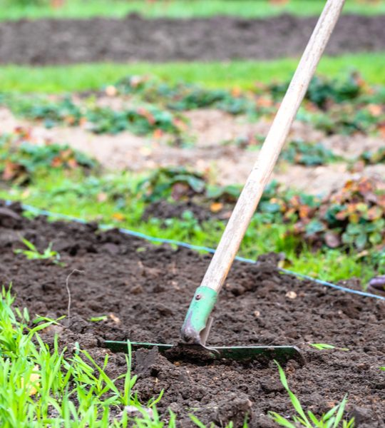 feed your garden in the fall