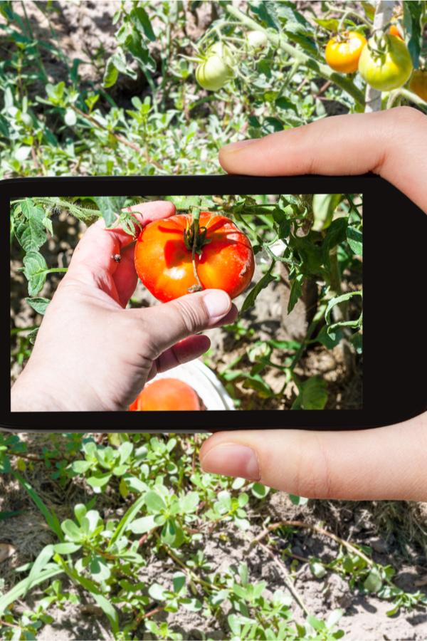 nyári kerti munka - a kert fényképezése