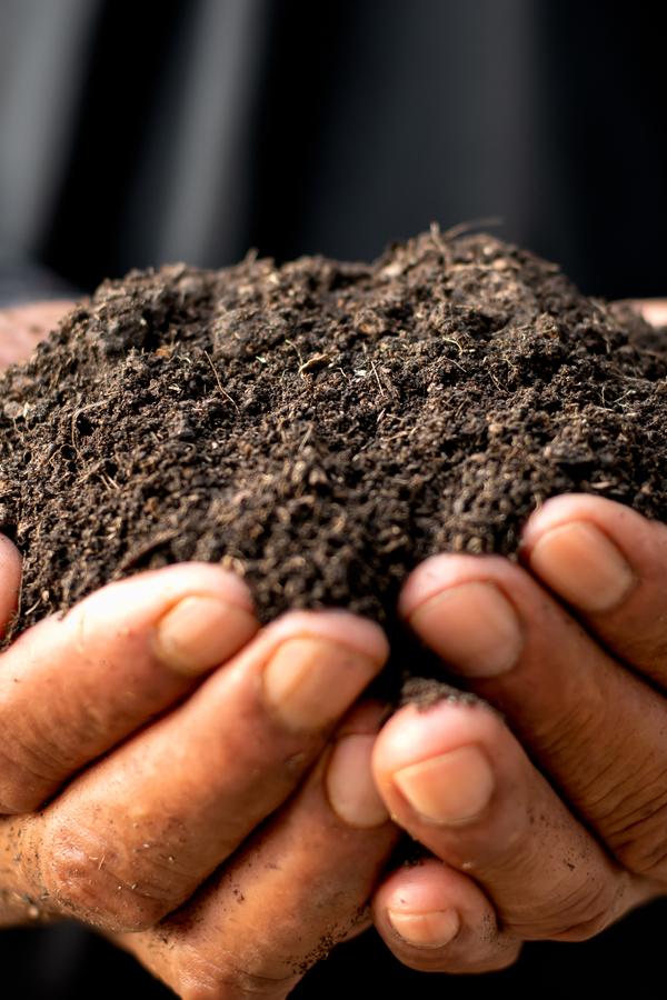 gazdag szerves talaj