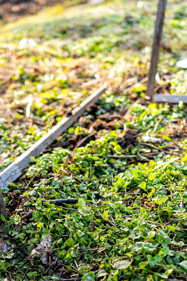 bare soil garden