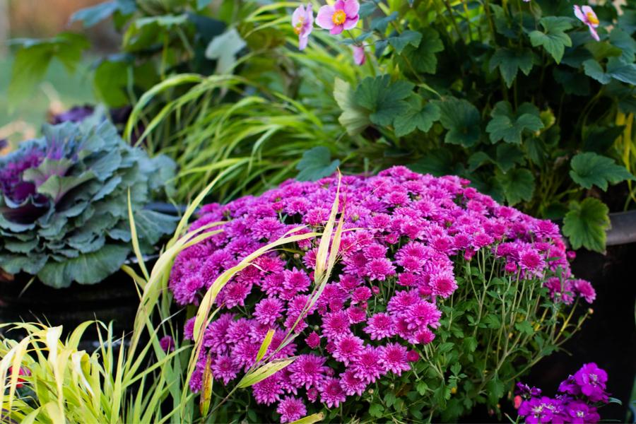 egyedülálló őszi virágos növények