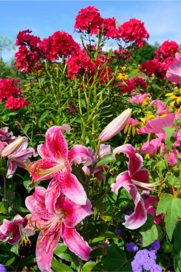 ágyak feltöltése évelőkkel - Hogyan tisztítsuk meg a virágágyásokat idén ősszel