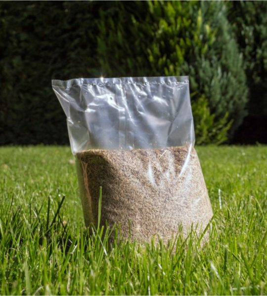 how to get grass seed to grow