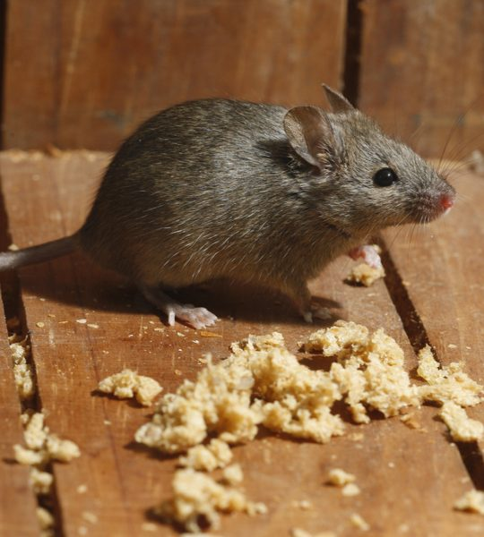 how to keep mice out
