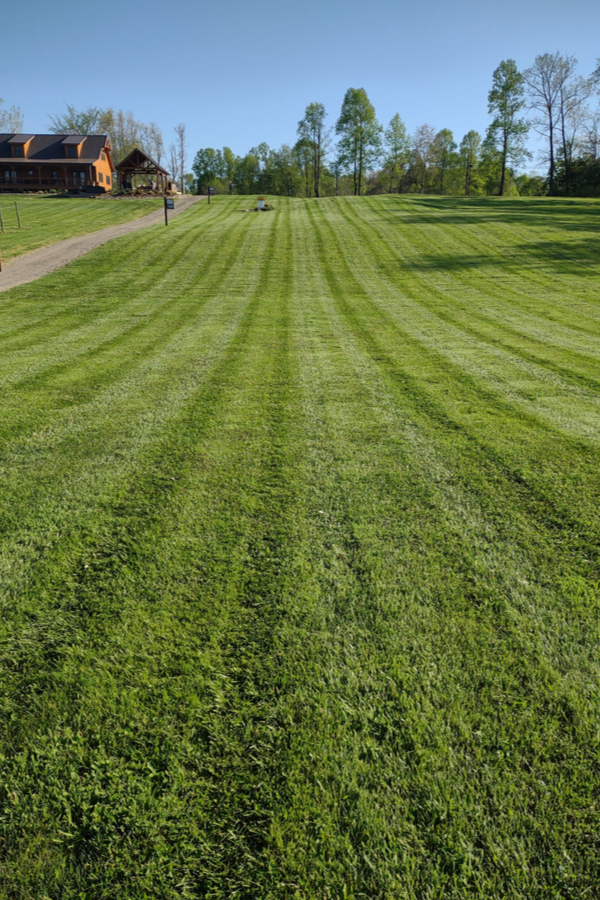 how to get grass to grow