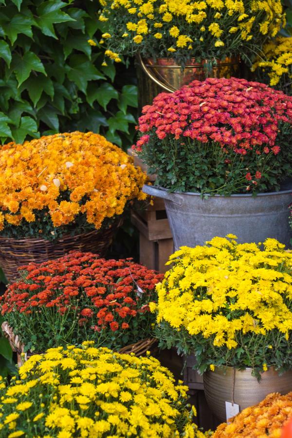 3 őszi növény uniuqe